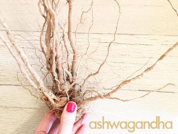 Raíz de Ashwagandha